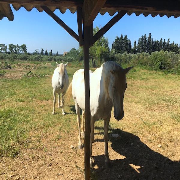 Gîte rural en provence Maussane les Alpilles